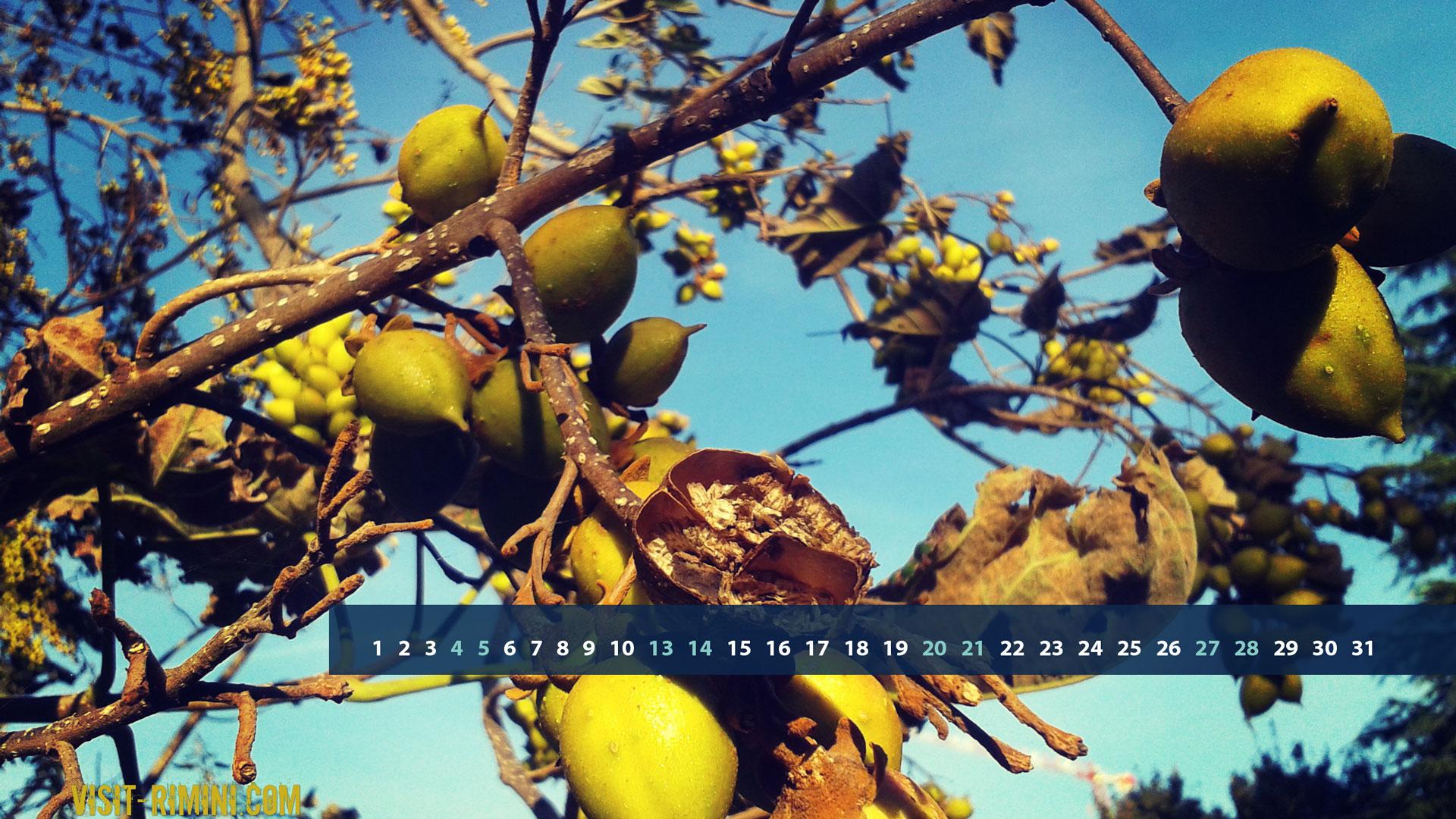 Beautiful Autumn Fruit Rimini
